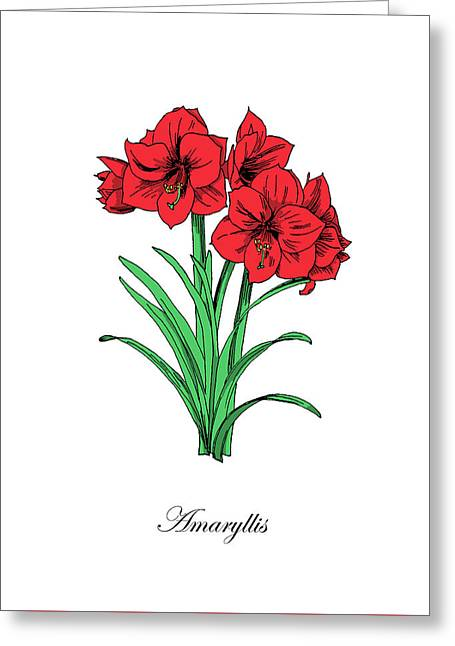 Colored Amaryllis. Botanical Greeting Card