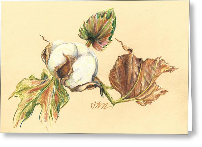 Colored Pencil Cotton Plant Greeting Card