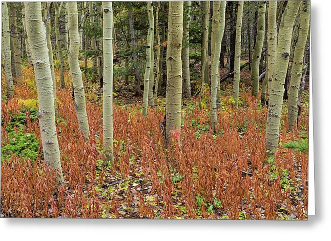 Colorful Aspen Forest Floor Greeting Card