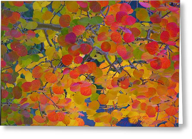 Colorful Aspen Greeting Card