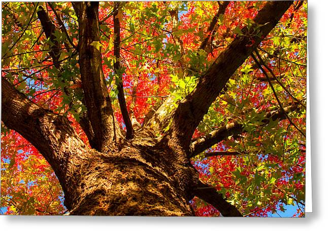 Colorful Autumn Abstract Greeting Card