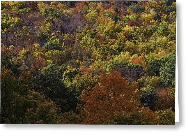 Colorful Autumn Hillside Greeting Card