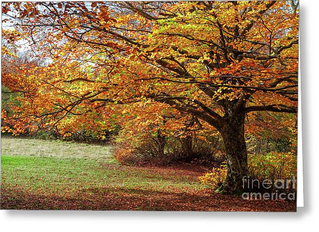 Colorful Autumn In The Forest Of Canfaito Park, Italy Greeting Card