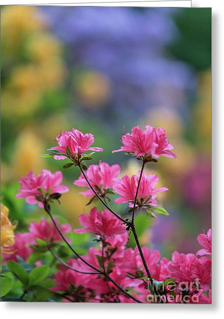 Colorful Azaleas Montage Greeting Card by Mike Reid