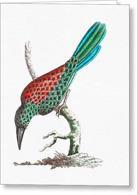 Colorful Bird Art - Great Jamacar Red Blue And Green Birds Wall Art Greeting Card