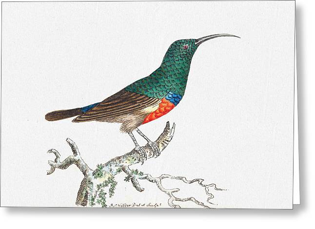 Colorful Bird Wal Art - Red Bellied Creeper Prints Greeting Card