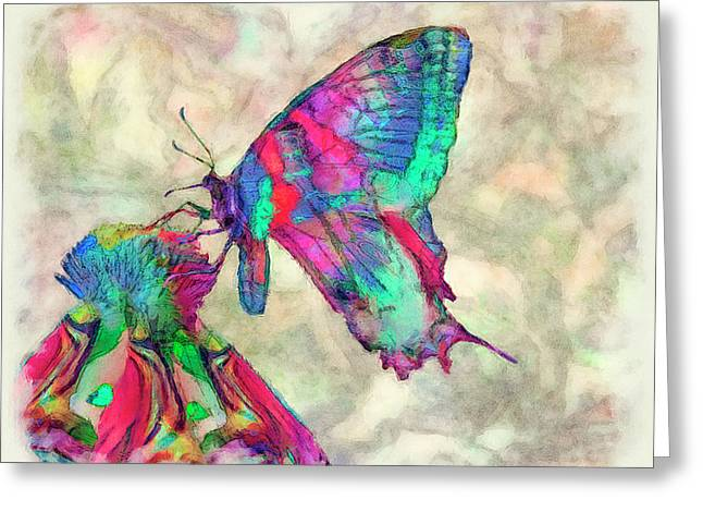 Colorful Butterfly 2 Greeting Card by Jack Zulli