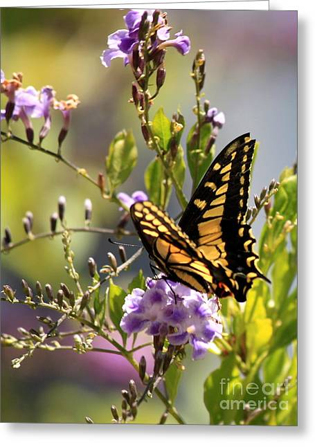 Garden Flowers Photographs Greeting Cards - Colorful Butterfly Greeting Card by Carol Groenen