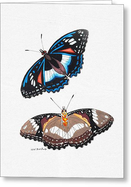 Colorful Butterfly Wall Art - Cramerian Butterfly Greeting Card