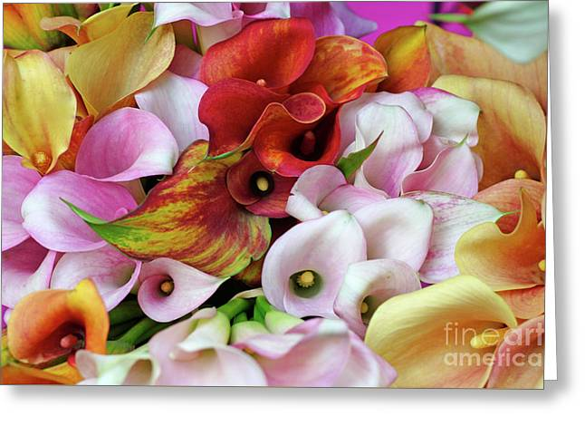 Colorful Calla Lilies Greeting Card