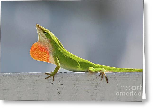 Colorful Carolina Anole Lizard Greeting Card