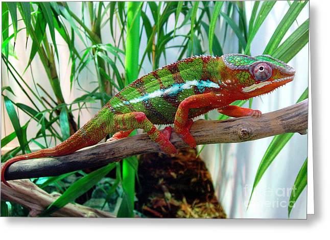 Colorful Chameleon Greeting Card by Nancy Mueller