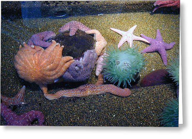 Colorful Coral Greeting Card by Laurie With