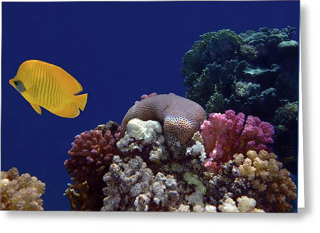 Colorful Coralreef Greeting Card