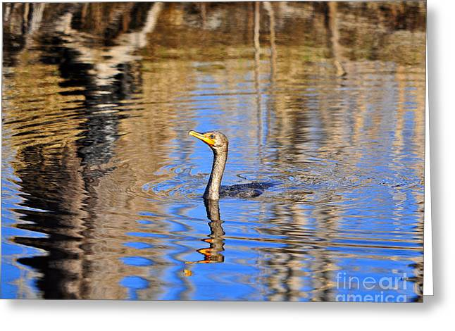 Colorful Cormorant Greeting Card by Al Powell Photography USA