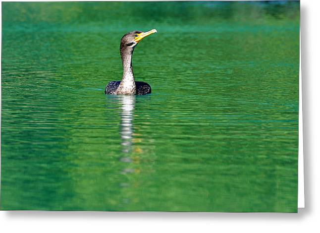 Colorful Cormorant Greeting Card by Teresa Blanton