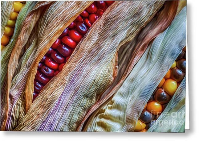 Colorful Corn Greeting Card