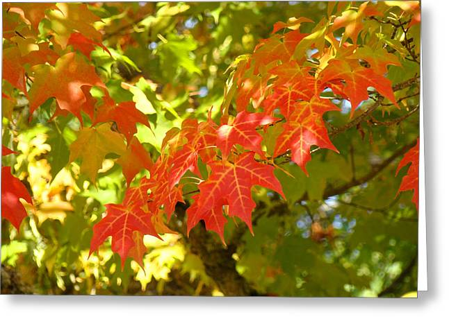 Colorful Fall Leaves Red Nature Landscape Baslee Troutman Greeting Card by Baslee Troutman