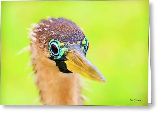 Colorful Female Anhinga Greeting Card