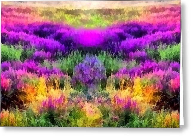 Colorful Field Of A Lavender Greeting Card