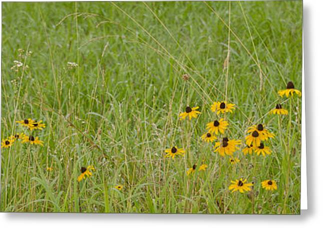 Colorful Field Greeting Card