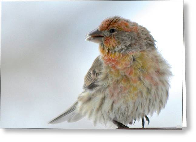 Colorful Finch Eating Breakfast Greeting Card