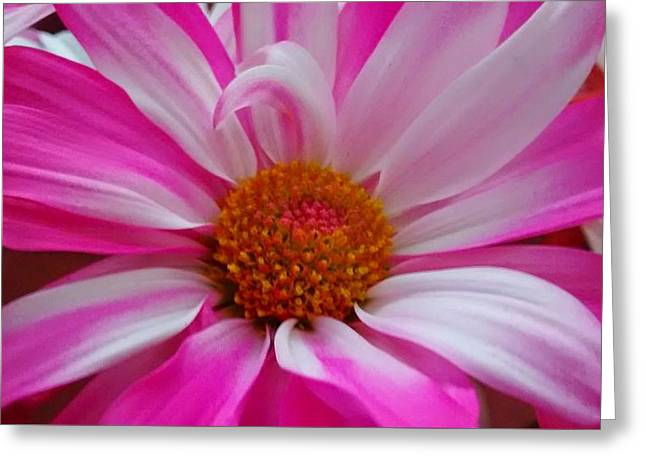 Colorful Flower Greeting Card by Dustin Soph