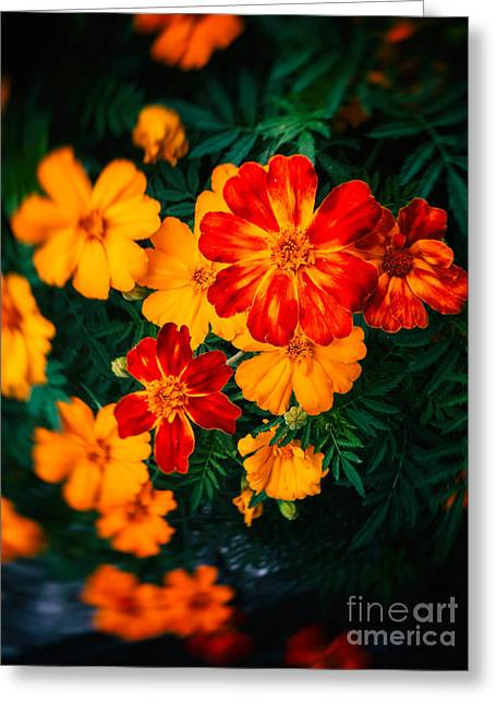 Greeting Card featuring the photograph Colorful Flowers by Silvia Ganora