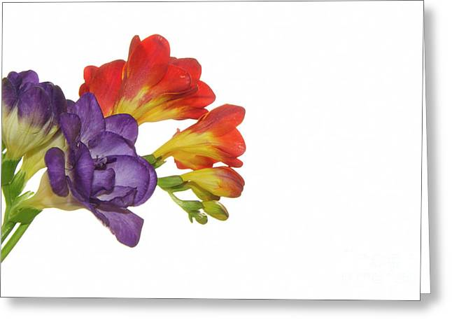 Colorful Freesias Greeting Card