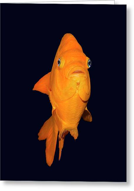 Colorful Garibaldi Fish Greeting Card by Joe Belanger