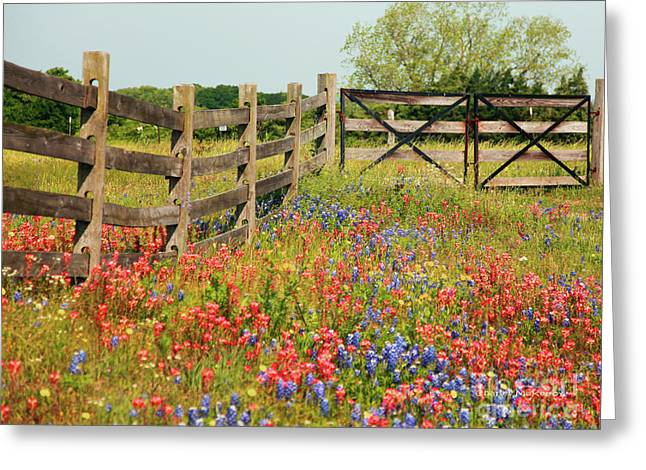 Colorful Gate Greeting Card