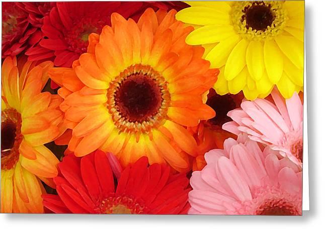 Colorful Gerber Daisies Greeting Card by Amy Vangsgard