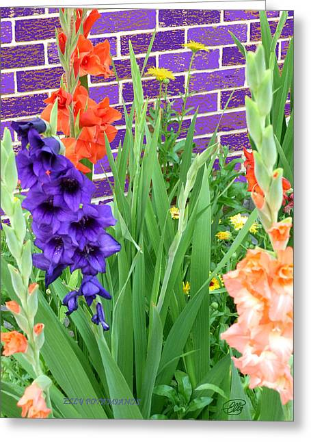 Colorful Gladiolas Greeting Card