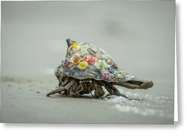 Greeting Card featuring the photograph Colorful Hermit Crab by Chris Bordeleau