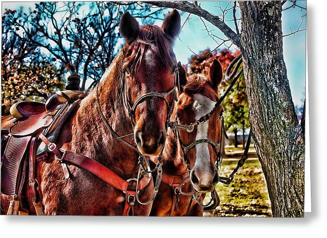 Colorful Horses Greeting Card by Toni Hopper