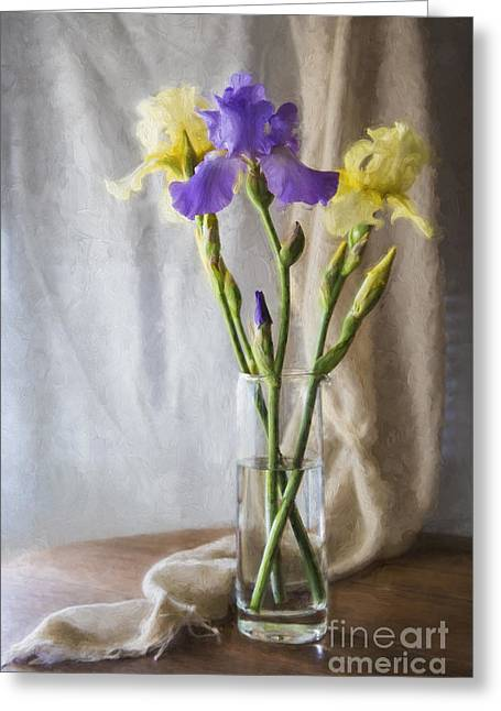 Colorful Irises Greeting Card
