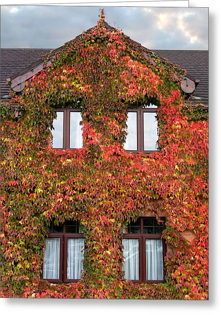 Colorful Ivy House Ireland Greeting Card by Pierre Leclerc Photography