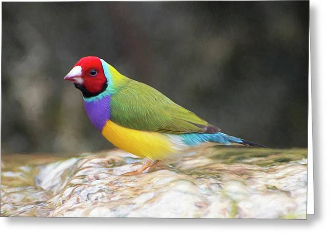 Greeting Card featuring the photograph Colorful Lady Gulian Finch  by Penny Lisowski