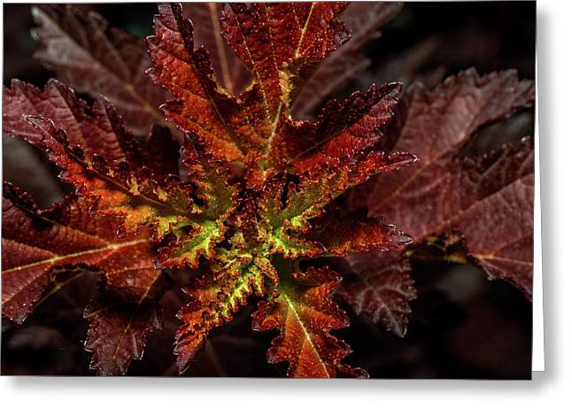 Greeting Card featuring the photograph Colorful Leaves by Paul Freidlund
