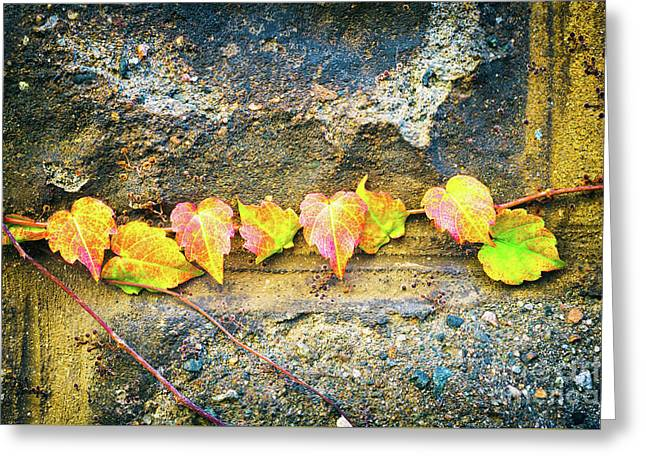Colorful Leaves Greeting Card by Silvia Ganora
