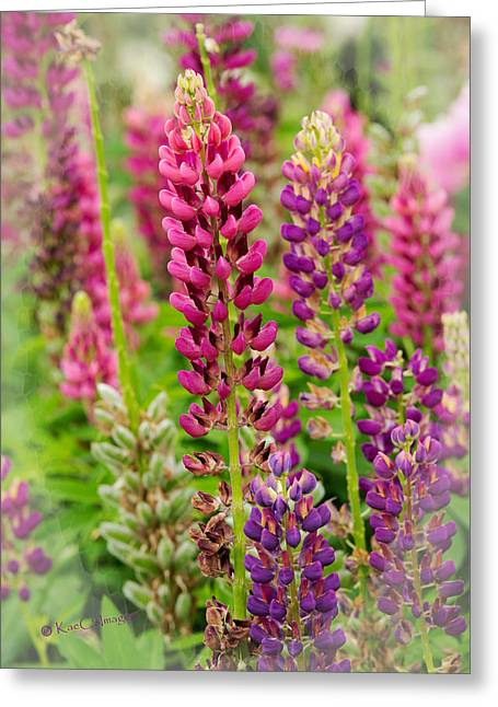 Colorful Lupine Greeting Card