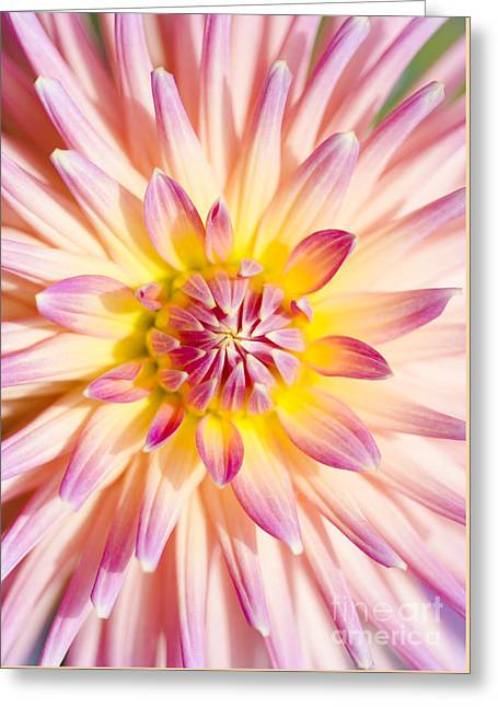 Colorful Macro Dahlia Flower. Beauty In Springtime Greeting Card