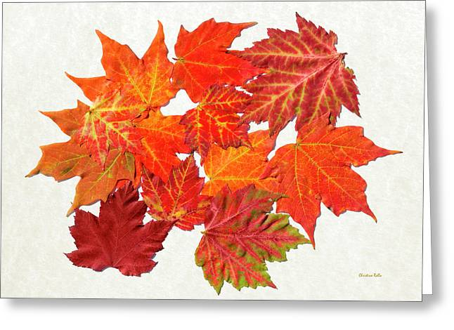 Colorful Maple Leaves Greeting Card