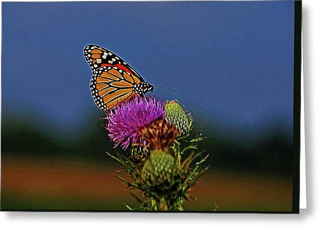 Greeting Card featuring the photograph Colorful Monarch by Sandy Keeton