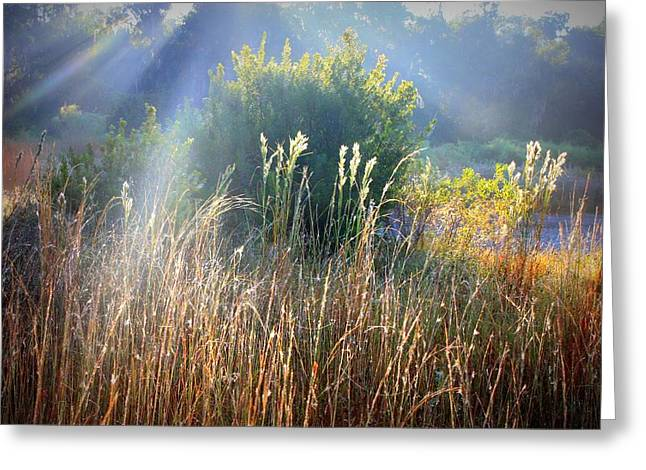 Colorful Morning Marsh Greeting Card