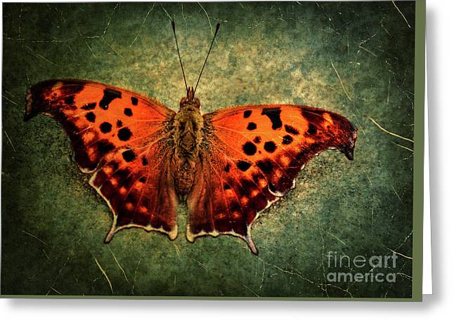 Colorful Orange Butterfly Greeting Card