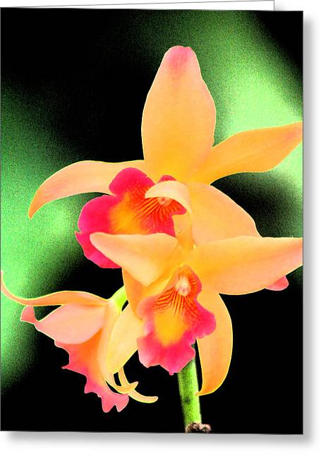 Colorful Orchid Greeting Card by Nanette Hert
