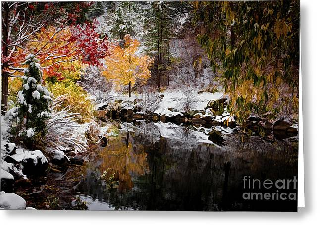 Colorful Pond Greeting Card