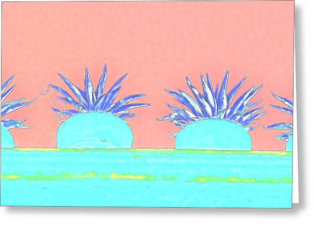 Colorful Potted Plants Mexico Greeting Card