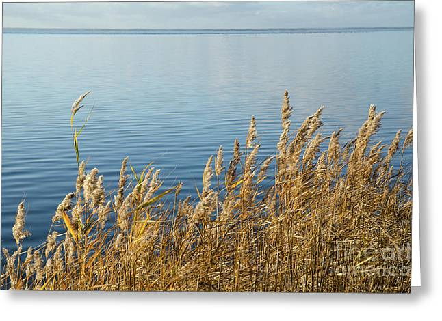 Colorful Reeds Greeting Card by Kennerth and Birgitta Kullman